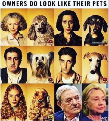 Owners-Pets